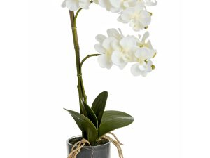 eden potted orchid